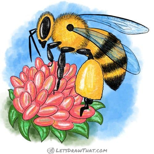 How to draw a bee - completed coloured-in drawing
