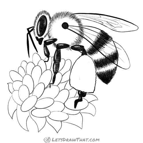 How to draw a bee - completed outline drawing