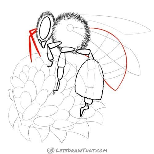 Draw the antennae and the body