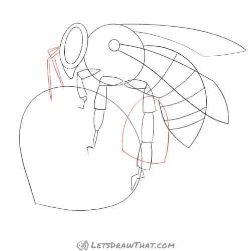 Sketch the bee's antennae and pollen bag