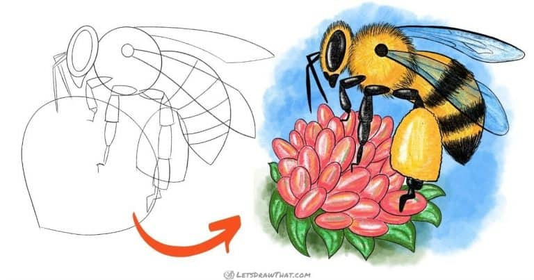 How to draw a bee - simple semi-realistic style - step-by-step-drawing tutorial featured image