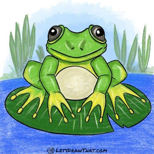 How to draw a frog: completed coloured-in drawing