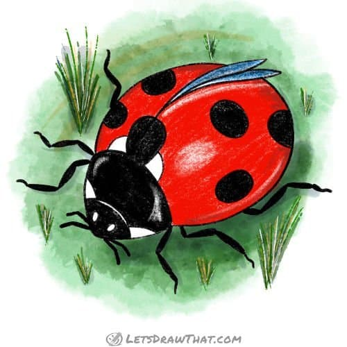 How to draw a ladybug - complete coloured-in drawing