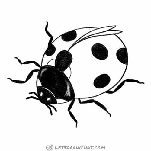 How to draw a ladybug - complete outline drawing