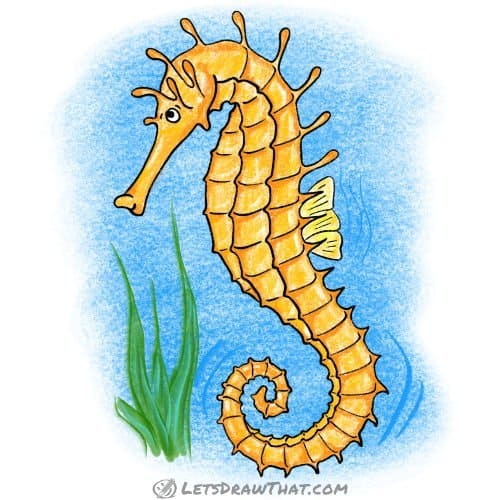 How to draw a seahorse: completed coloured in drawing