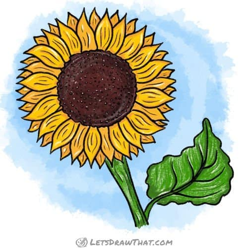 How to draw a sunflower: finished drawing coloured-in