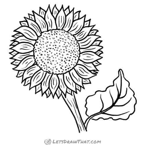 How to draw a sunflower: finished outline drawing