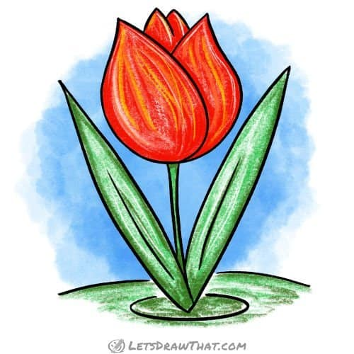 How to draw a tulip - finished coloured-in drawing