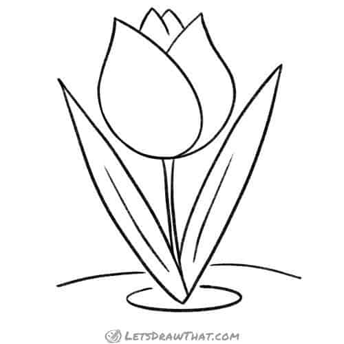 How to draw a tulip - finished outline drawing