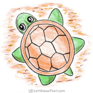Complete drawing of simple turtle from top